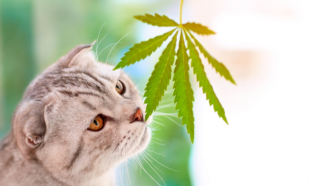 Find Dispensary Products For Pets
